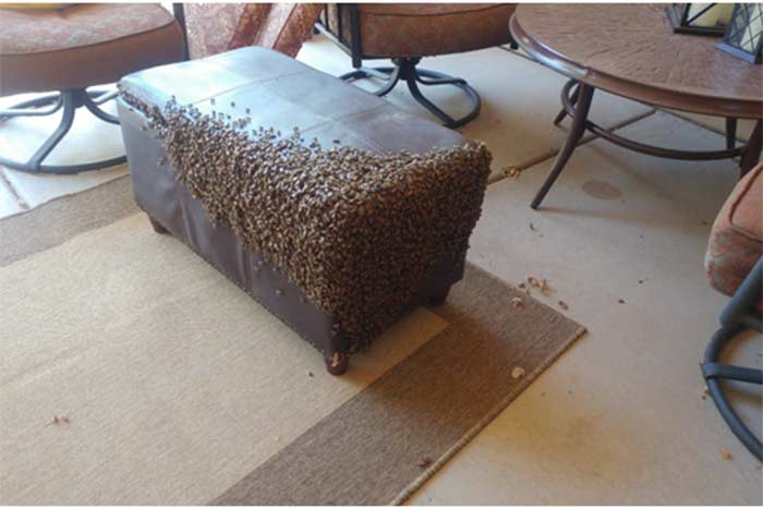 Bee & Honeycomb Removal from Upholstered Chest in Phoenix, AZ