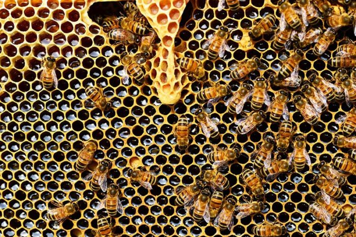 Beehive & Honeycomb Removal from Inside Wall of Your Home